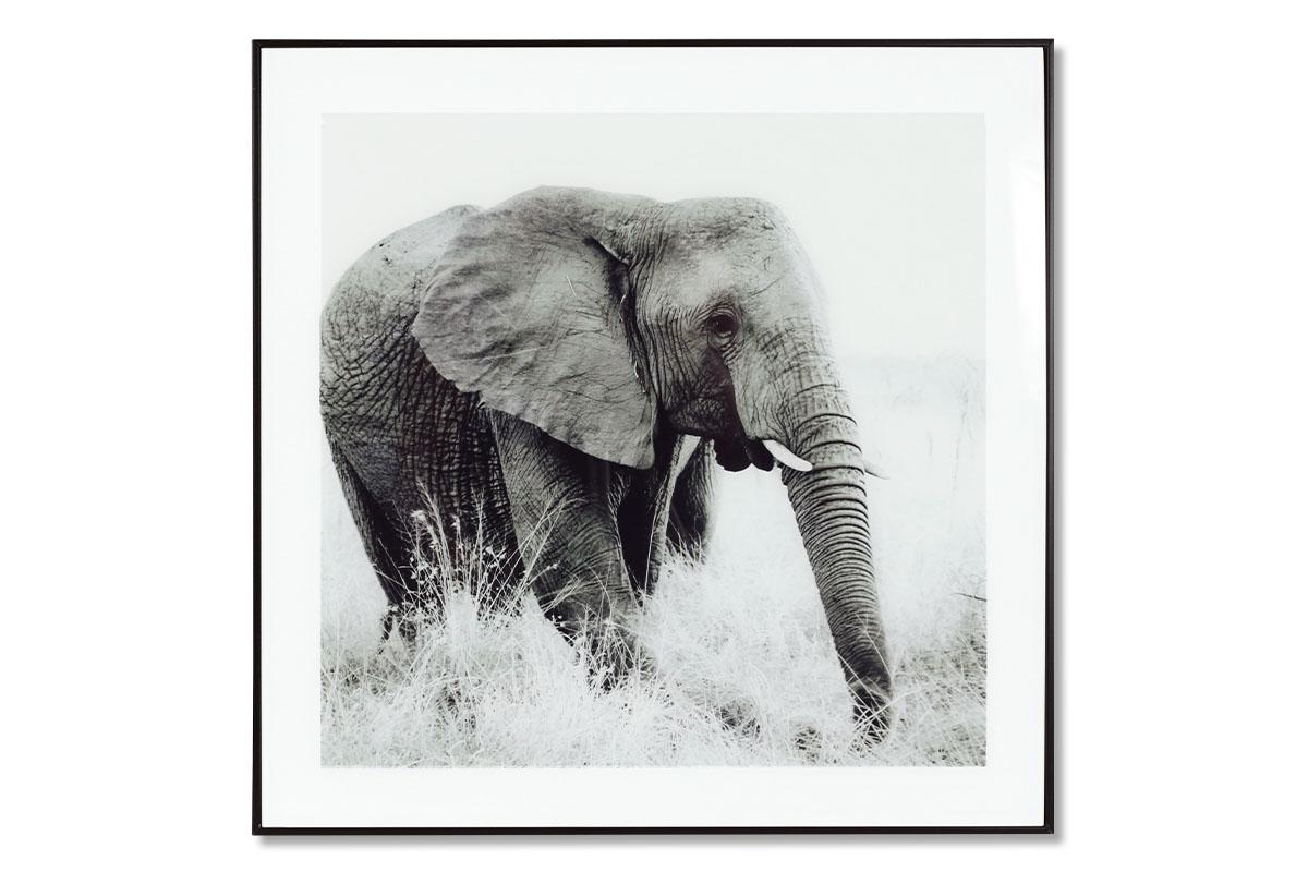 Autronic - Obraz skleněný 50x50 cm - HS059