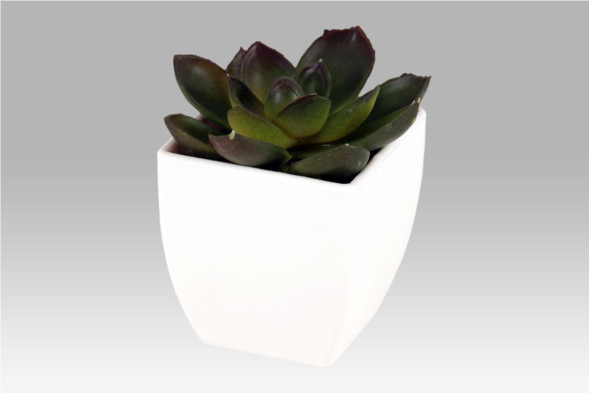 Autronic - Sukulent v plastovém obalu. Květina umělá. - NL0009
