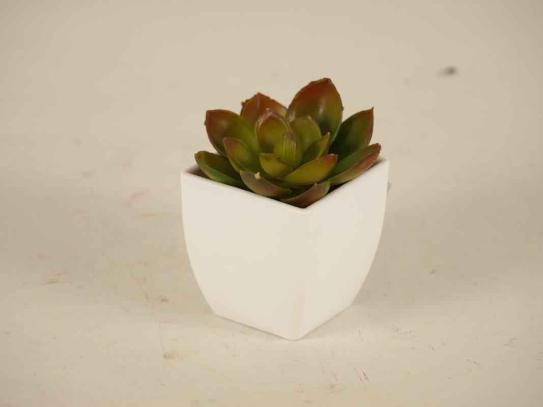 Autronic - Sukulent v plastovém obalu. Květina umělá. - NL0010