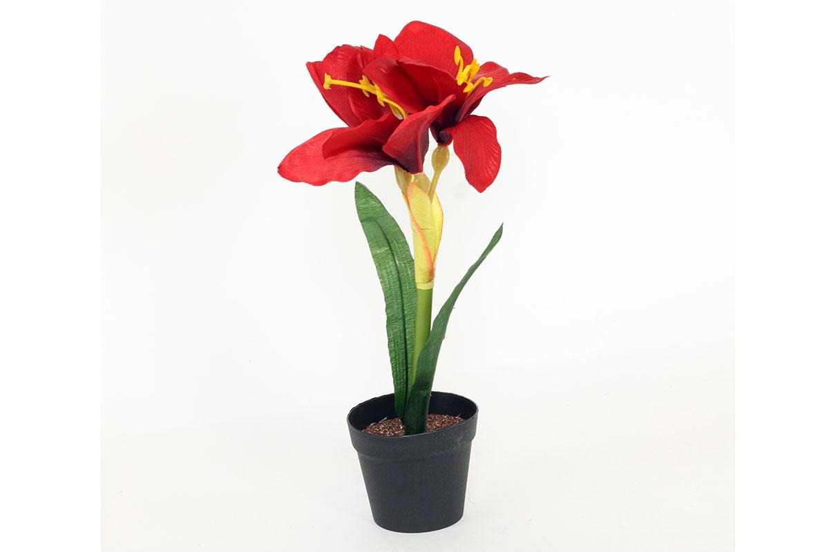 Amarilis v plastovém obalu, barva červená. Květina umělá.