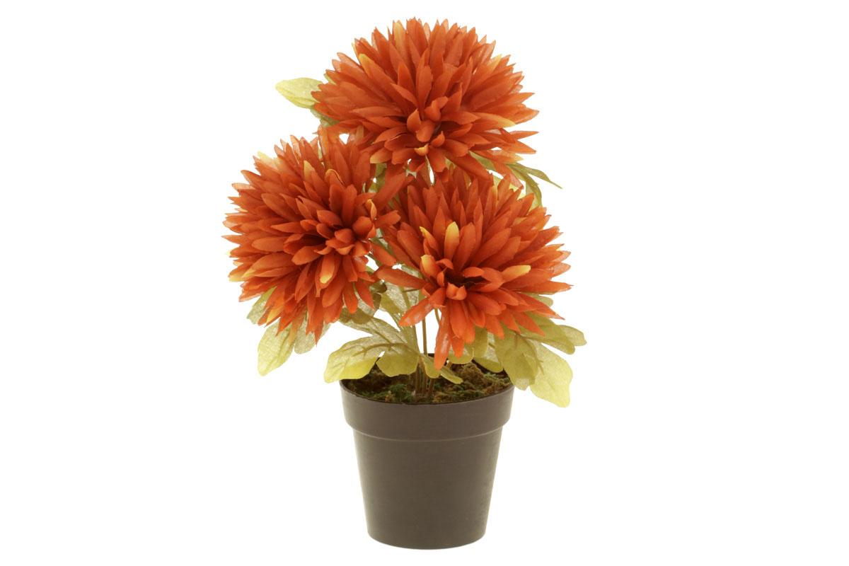 Autronic - Chryzantéma v obalu, 3-hlavá, hnědá. Květina umělá. - NL0101-BROWN