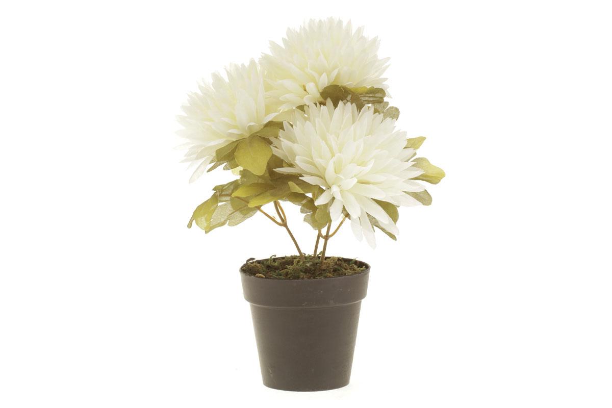 Autronic - Chryzantéma v obalu, 3-hlavá, krémová. Květina umělá. - NL0101-CRM