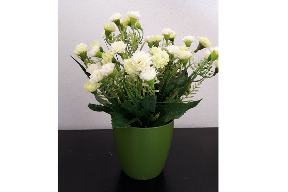 Mini karafiáty v plystovém květináči, barva bílá