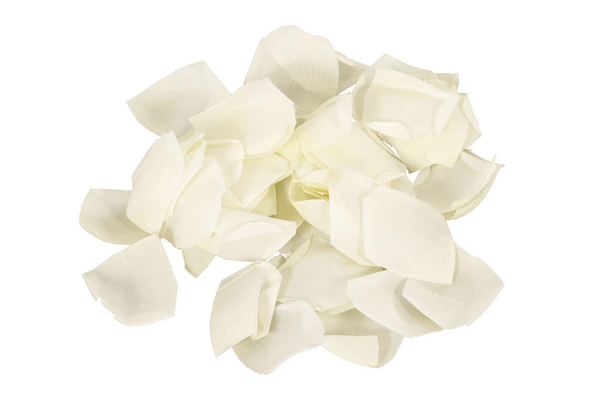 LUPENE RUŽÍ v polybagu, cream