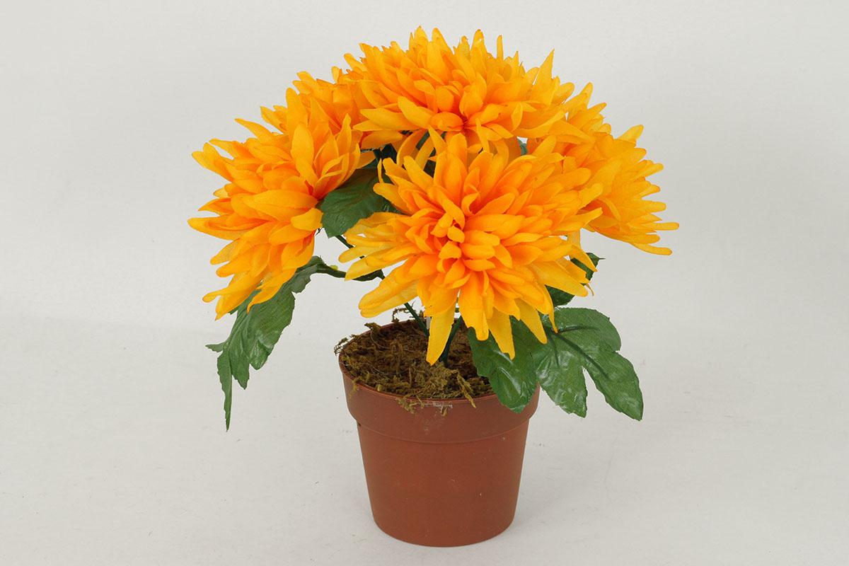 Chryzantéma v obalu - 6 hlavá, barva žlutá