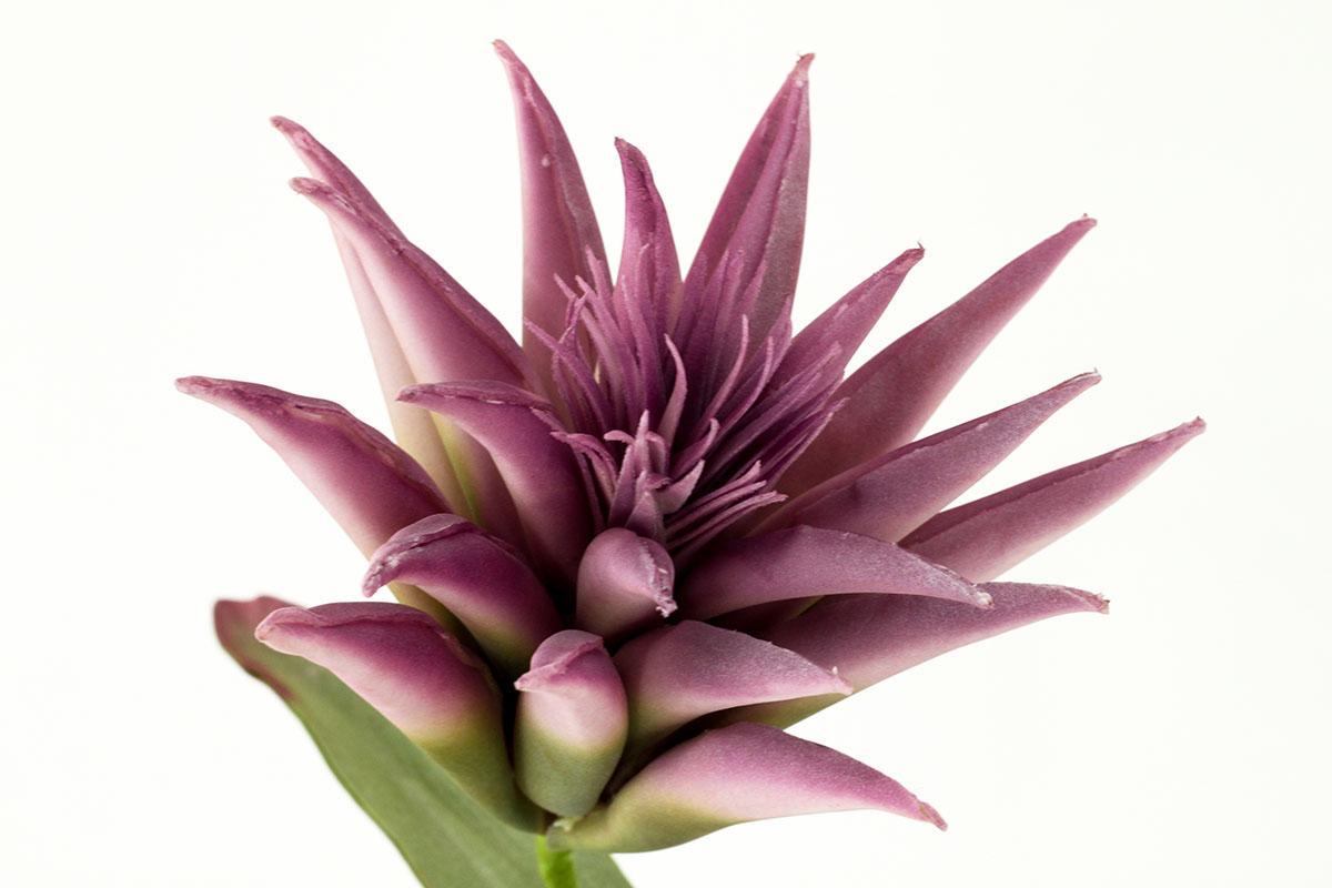 Umělá květina barva měruňková