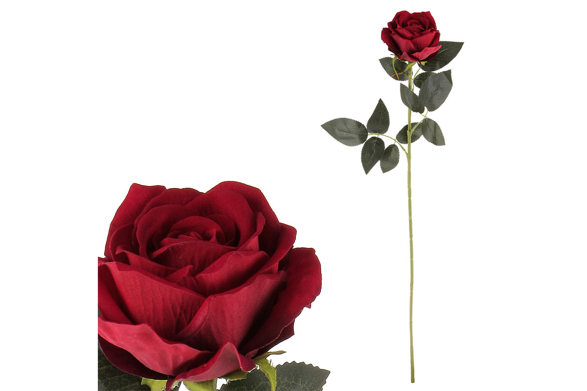 Růže, barva červená, samet.