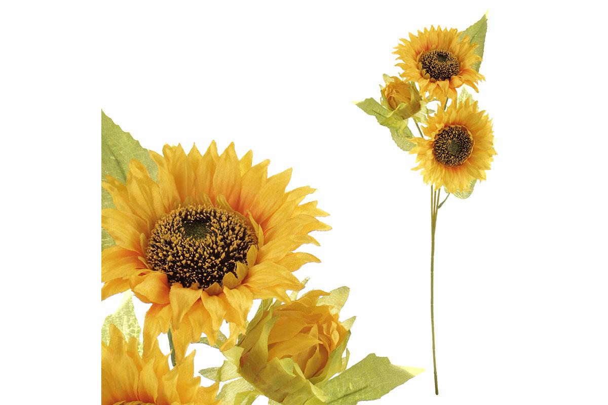 Slunečnice, 3- květá.