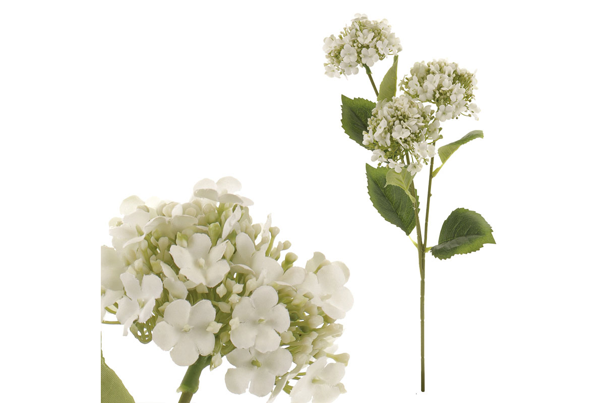 Kalina, 3-květá, barva bílá