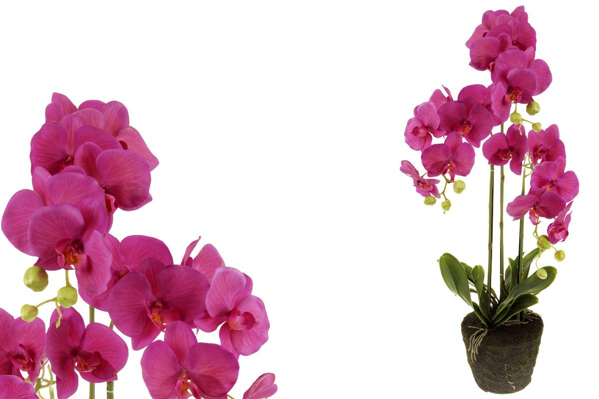 Orchideja v obalu, barva fialová.