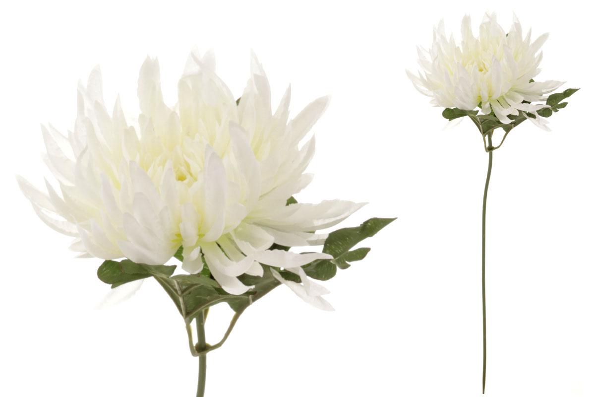 Chryzantéma, farba smotanová