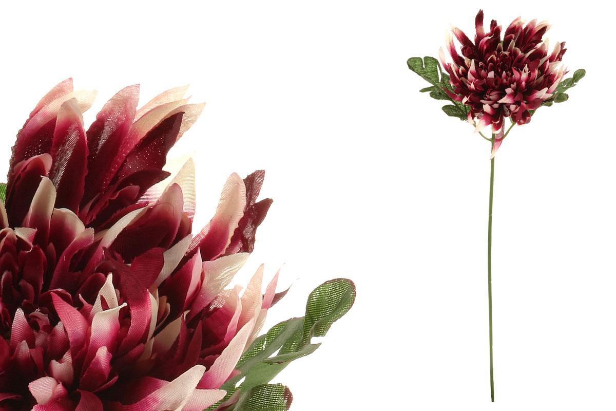 Chryzantéma, farba vínovo-smotanová