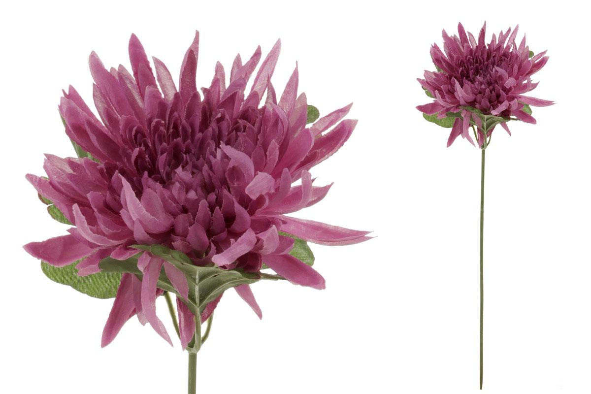 Chryzantéma, farba svetlofialová