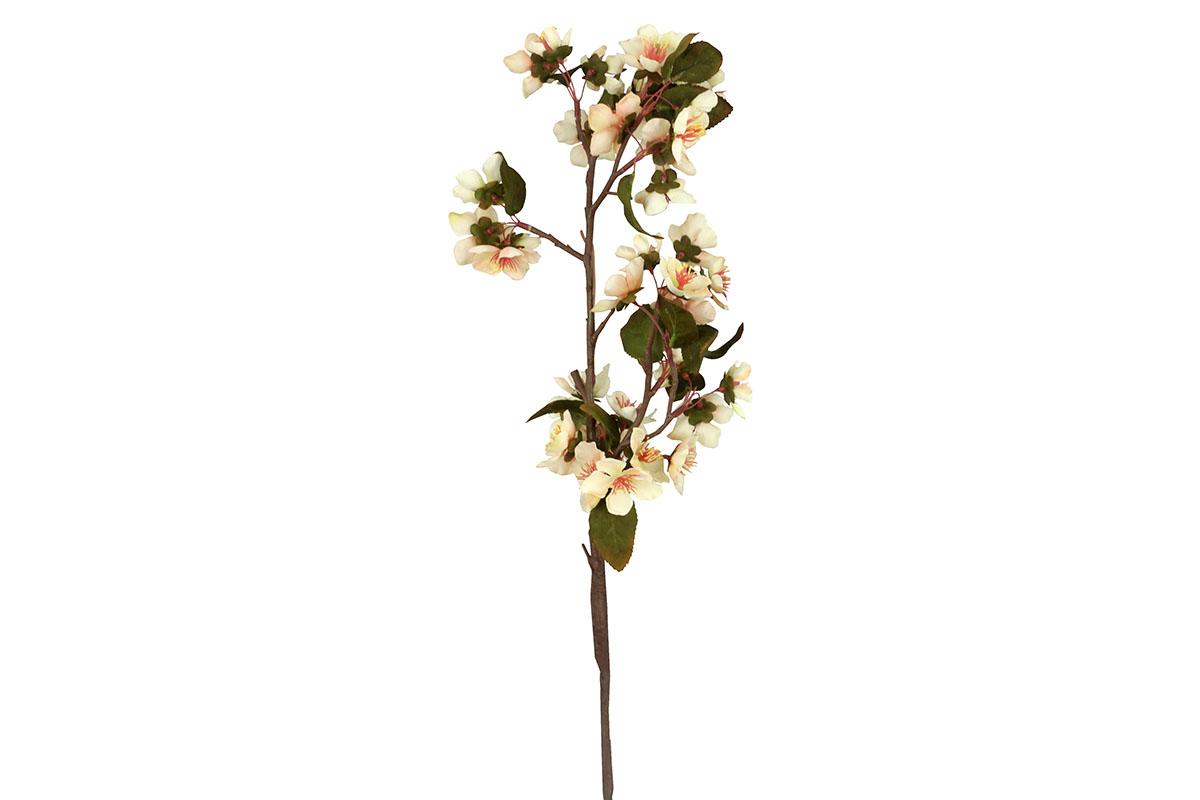 Kvet hrušky, farba smetanová