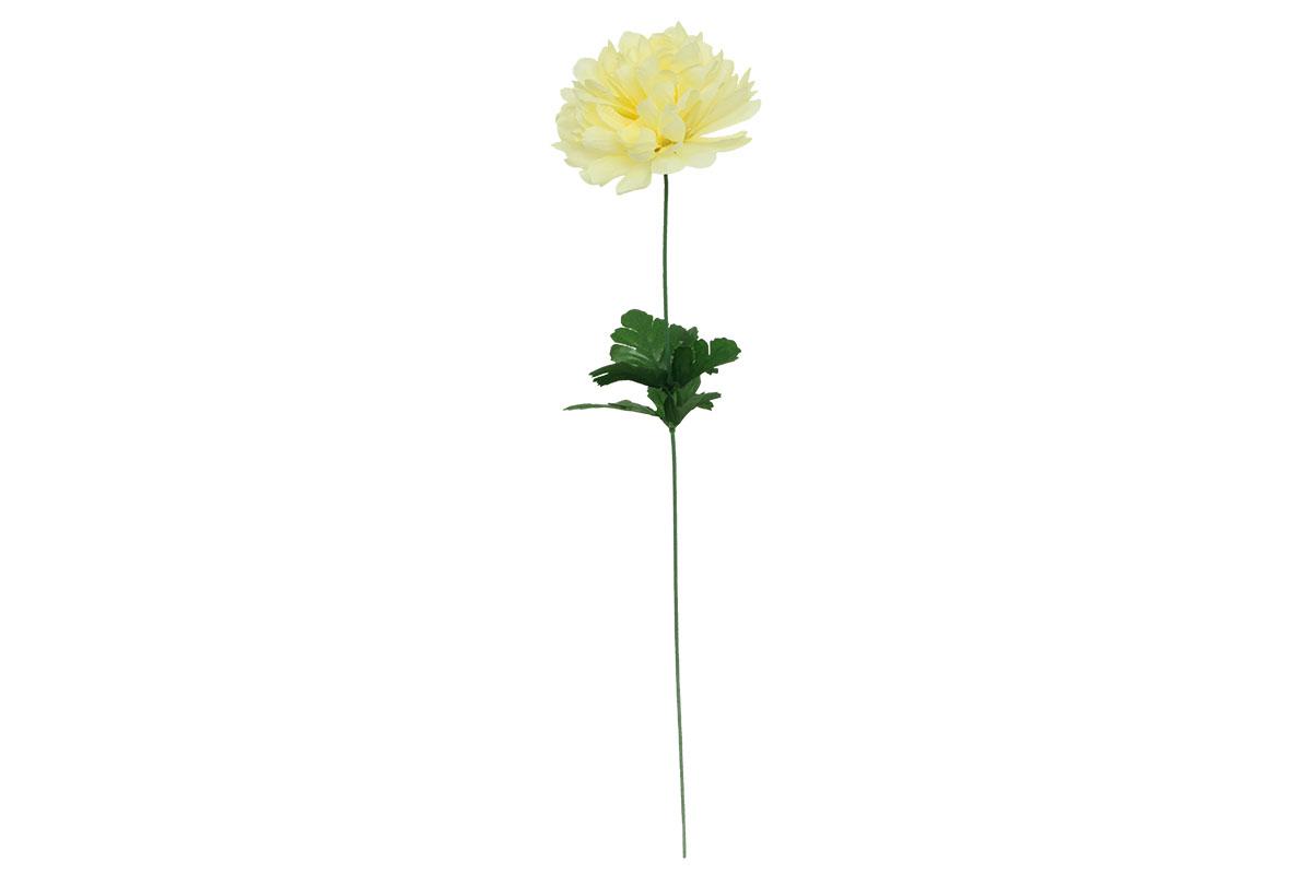 Chryzantéma jednohlavá, KRÉMOVÁ