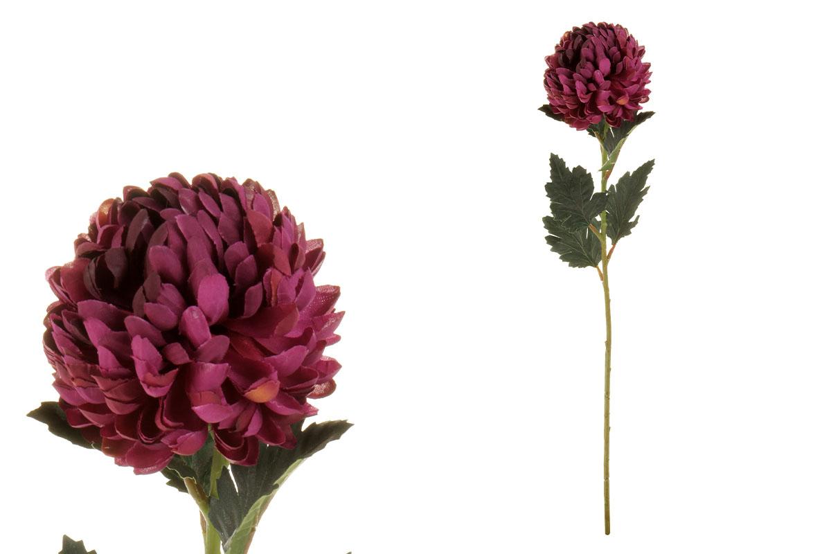 Chryzantéma jednohlavá, barva tm.fialová.