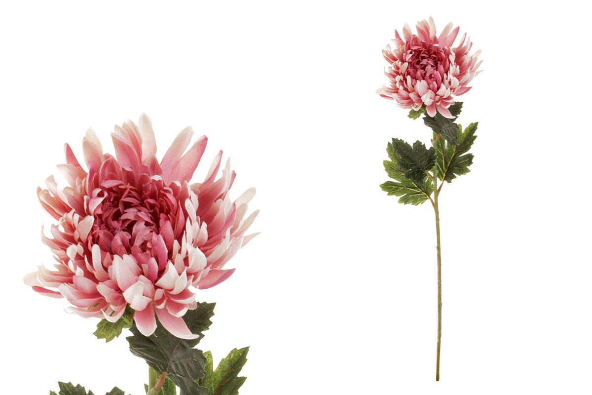Chryzantéma jednohlavá, barva růžová.