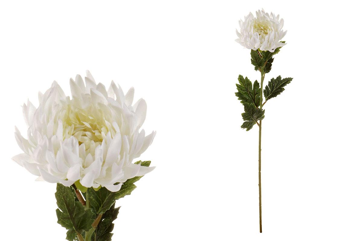 Chryzantéma jednohlavá, barva bílá.