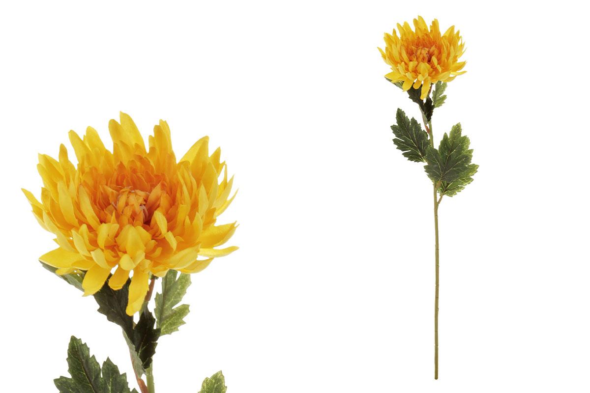 Chryzantéma jednohlavá, barva žlutá.