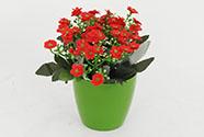 Kalanchoe umělá  v květináči, červená  barva