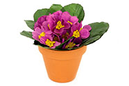 Petrklíč fialový, v keramickém květináči, umělá květina