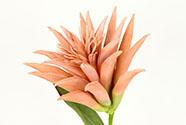 Květina umělá pěnová. Barva meruňková