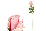 Růže, barva růžovo-lila. Květina umělá.