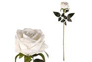 Růže, barva bílá, samet.