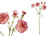 Minikarafiát, barva žíhaná červeno-bílá. Květina umělá.