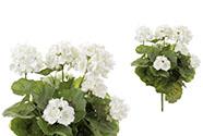 Muškát puget, barva bílá. Květina umělá.