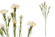 Mini Karafiát, barva růžovo-bílá. Květina umělá.