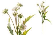 Květina umělá plastová.  Barva bílá s lila. Cena za 1ks(ve svazku 12ks).