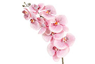 Orchidej, barva světlá růžová ojíněná. Květina umělá.