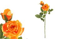Růže, barva oranžová. Květina umělá.