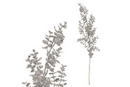 Eukalyptus větev, stříbrná barva.
