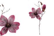 Magnolie ve vínové barvě, se třpytkami.
