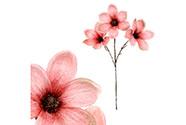 Magnolie v růžové barvě, s glitry.