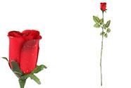 Růže s rosou,  barva červená barva. Květina umělá.