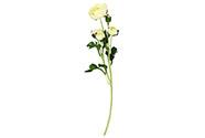 Ranunkulus 5 hlav, barva bílá. Květina umělá.