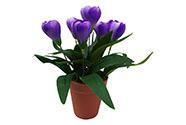 Umělá květina. Krokus v plastovém květináči, barva fialová