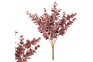 Eukalyptus ve fialové barvě, trs.