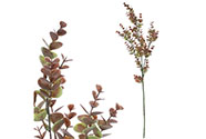 Eukalyptus větev,světle hnědá barva.