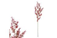 Eukalyptus větev, tmavě fialová barva.