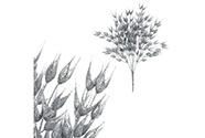 Oves v trsu - stříbrná barva s glitry