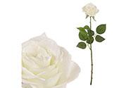 Růže, krémová. Květina umělá.