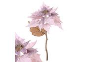 Vánoční růže, poinsécie , barva staro-fialová glitrovaná
