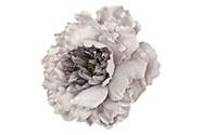 Květ pivoňky na klipu, barva staro-fialová glitrovaná