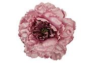 Květ pivoňky na klipu, barva, staro-růžová glitrovaná