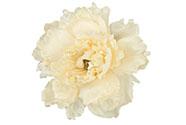 Květ pivoňky na klipu, umělá květina, bílá glitrovaná