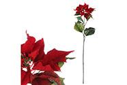 Vánoční růže, poinsécie , barva  červená